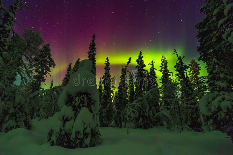 Lumières du nord dans la finition Laponie photo libre de droits