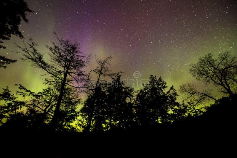 Lumières du nord dansant à travers le ciel silhouettant les arbres noirs photos libres de droits