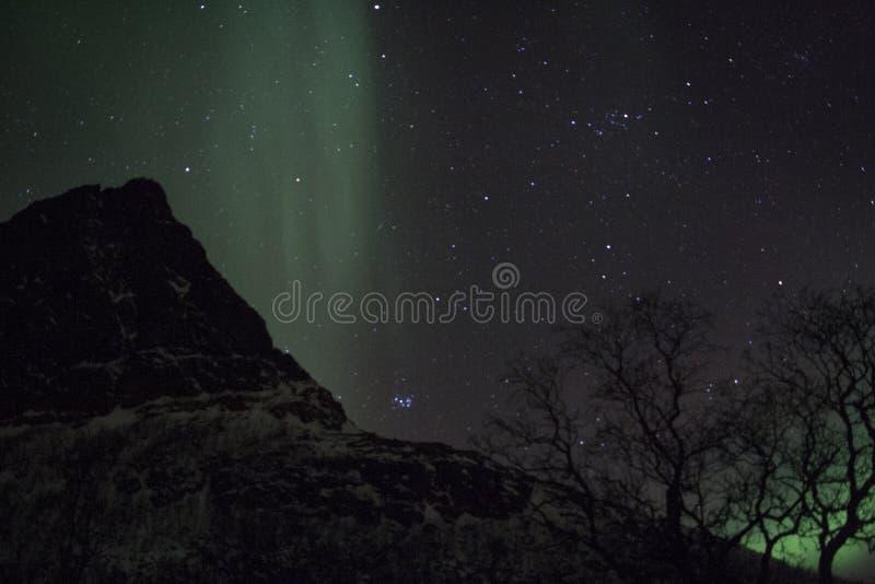 Lumières du nord derrière des arbres près de Tromso photos libres de droits
