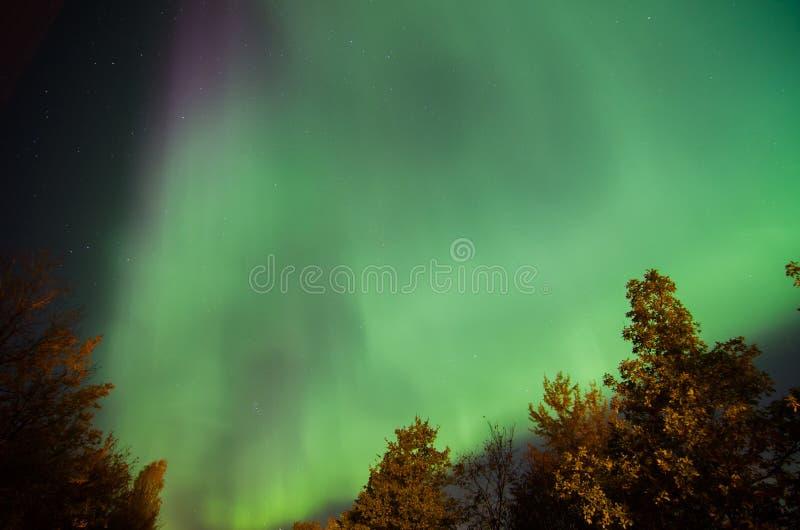Lumières du nord vertes tourbillonnant au-dessus des arbres dans la région de Léningrad Russie photos stock