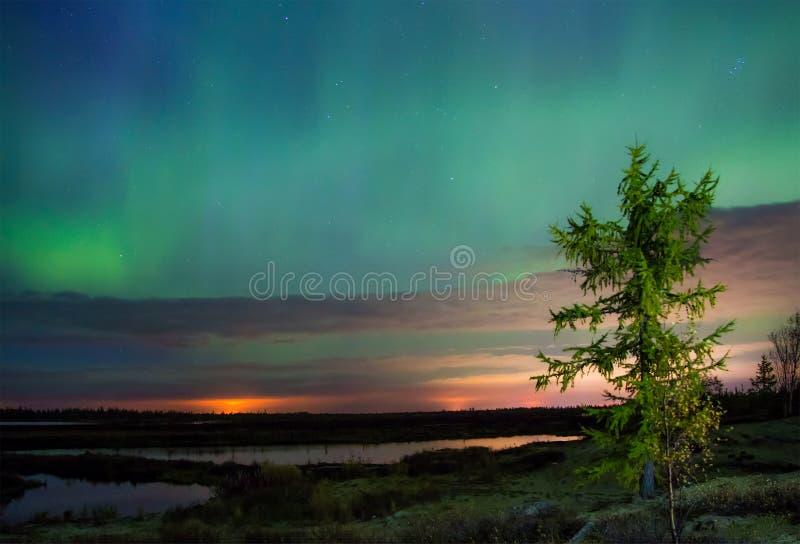 Lumières nordiques (borealis de l'aurore) images stock