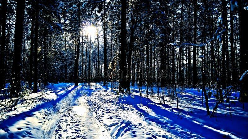 Lumia 640xl et x28 de forêt d'hiver de Sibirian ; mobile& x29 ; photos stock
