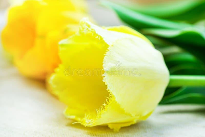 Lumineux et Pale Yellow Tulips Lying sur l'anniversaire minimaliste Pâques de jour du ` s de mère de style de tissu de fond de to photo stock