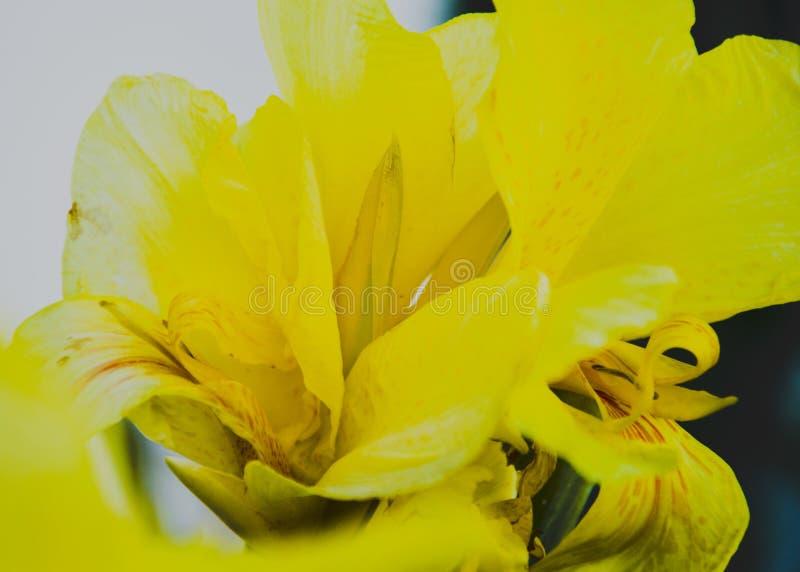 Lumineux jaune image libre de droits