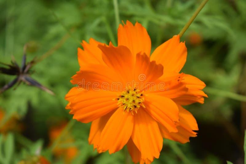 Luminosità arancio vibrante fotografia stock libera da diritti
