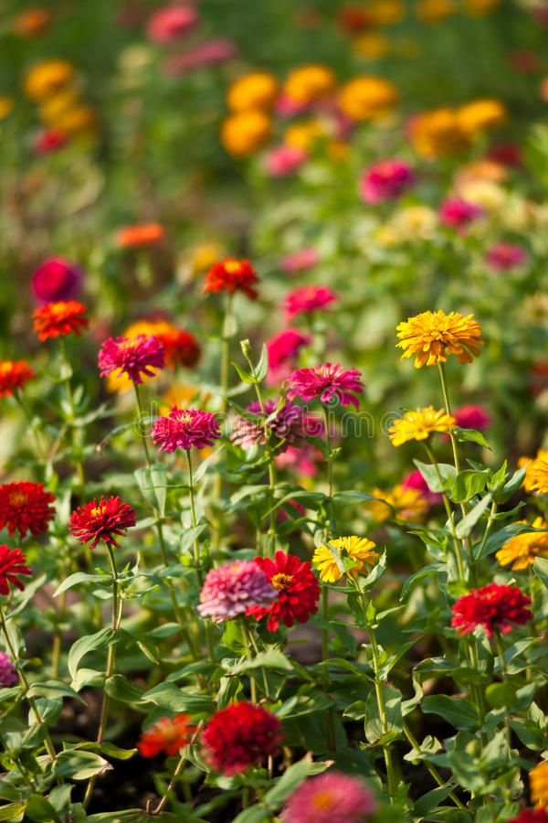 Download Lumphini Park, Flowers. stock image. Image of environment - 15939697