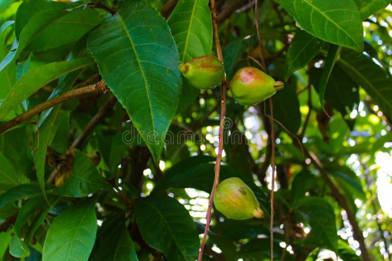 Lumpini公园热带植物在曼谷,泰国 图库摄影