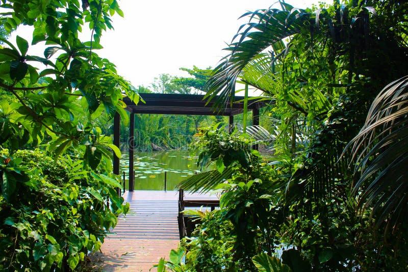 Lumpini公园的,泰国Lumpini湖 免版税库存照片