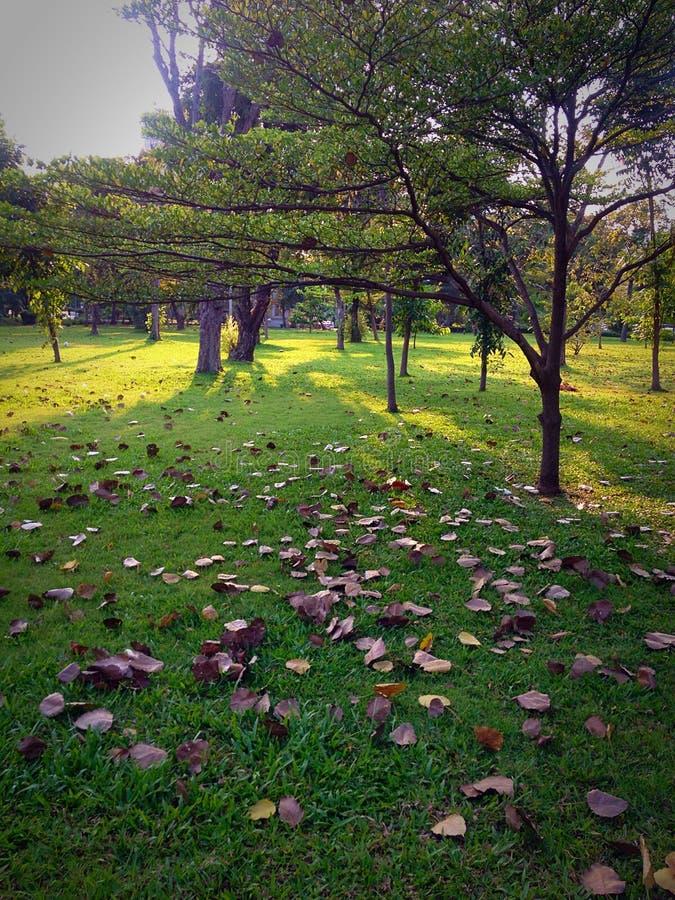 Lumpini公园,生活是短喜欢落 免版税图库摄影