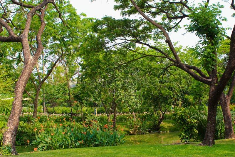Lumpini jezioro przy Lumpini parkiem, Tajlandia obrazy stock