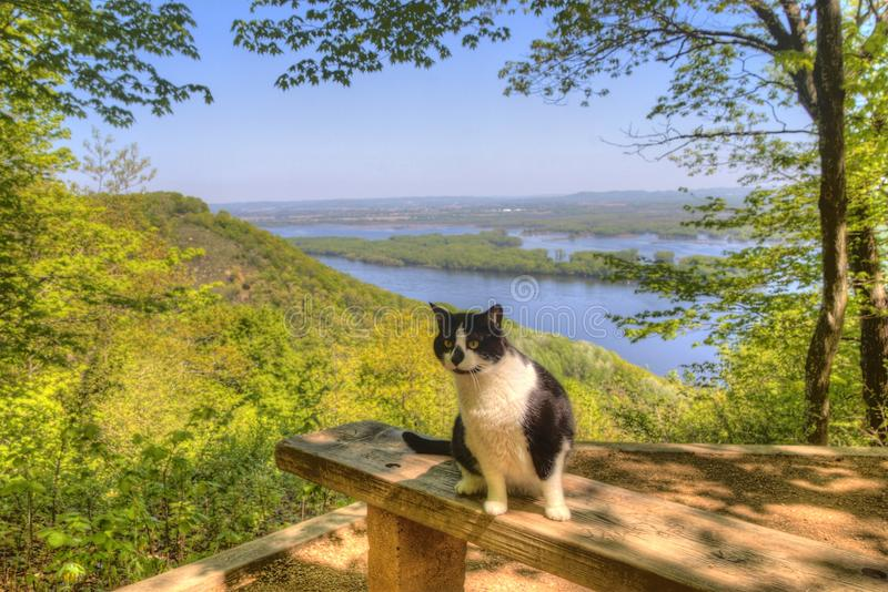 Luna the Adventure Kitty is a feline explorer who travels the midwest and beyond looking for new things to see and new places to v royalty free stock photos