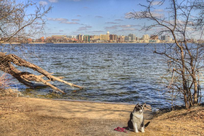 Luna the Adventure Kitty is a feline explorer who travels the midwest and beyond looking for new things to see and new places to v stock photo