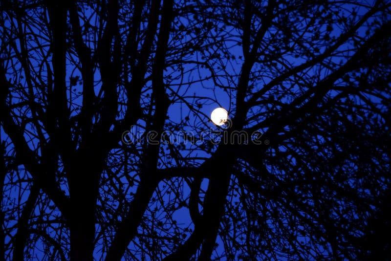 Luna attraverso gli alberi immagine stock