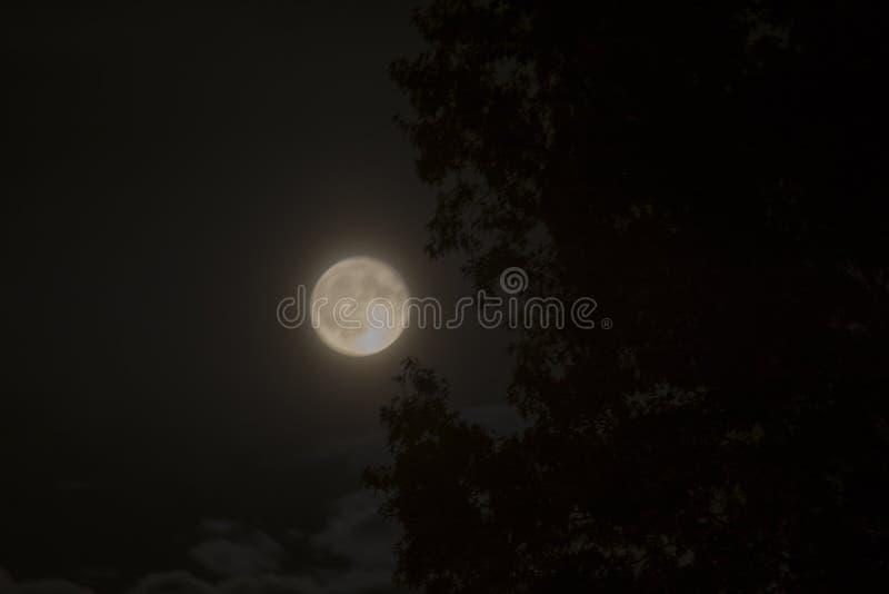 Luna brillante del verano imágenes de archivo libres de regalías