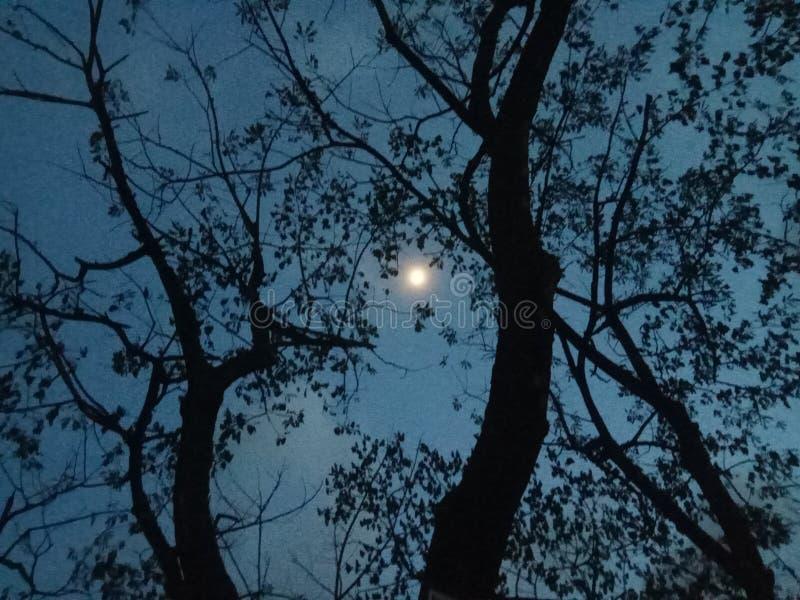 Luna de la lucha imagen de archivo