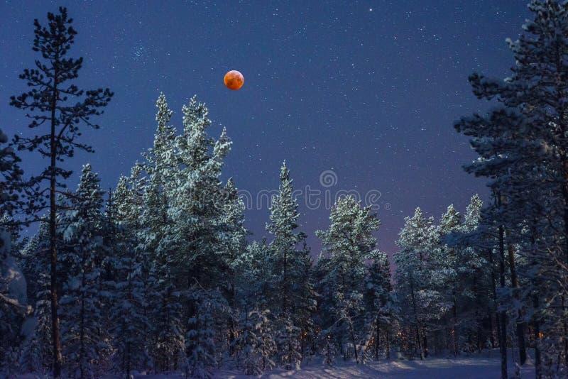 Luna de la sangre en el taiga fotografía de archivo libre de regalías