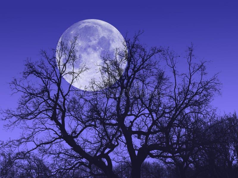 Luna del árbol de la noche imagen de archivo