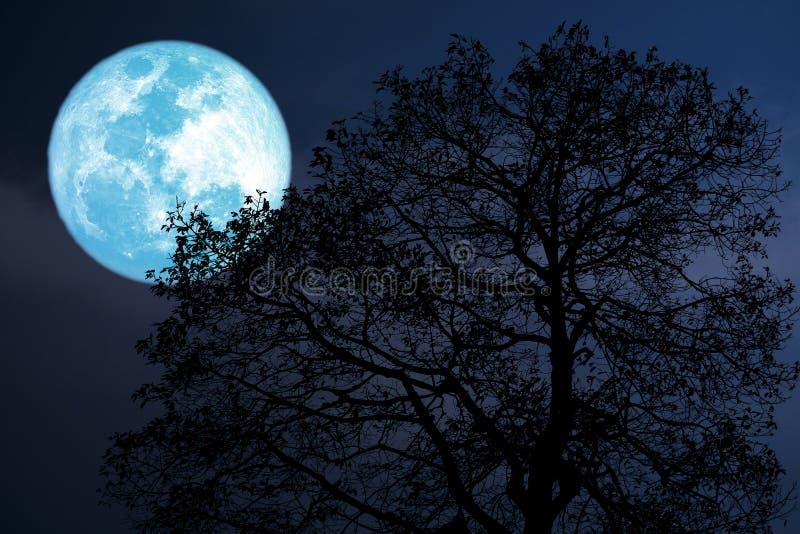 luna del dollaro su cielo notturno indietro sopra la foresta scura della siluetta fotografie stock