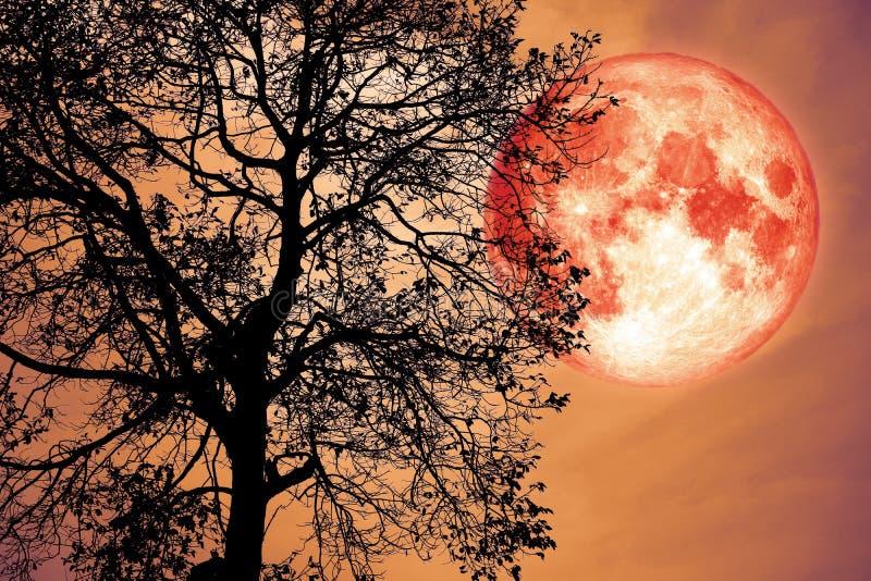luna del dollaro su cielo notturno indietro sopra la foresta scura della siluetta immagini stock