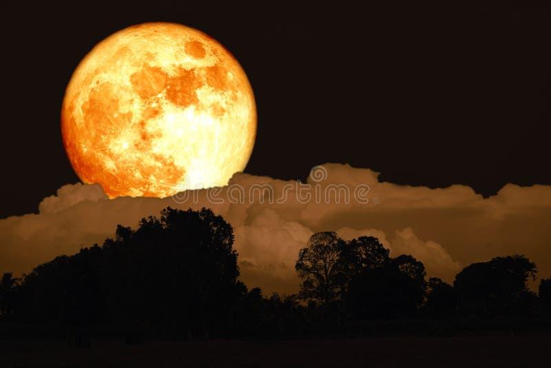 luna del sangue del dollaro su cielo notturno indietro sopra la foresta della siluetta fotografie stock libere da diritti