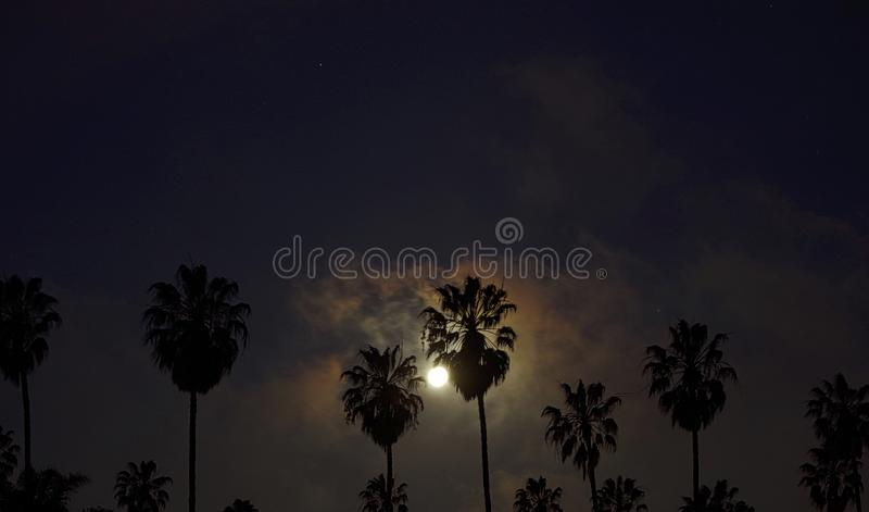 Luna detrás de las palmas imágenes de archivo libres de regalías
