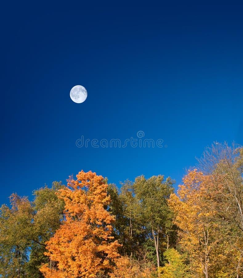 Luna di Halloween di autunno immagine stock libera da diritti
