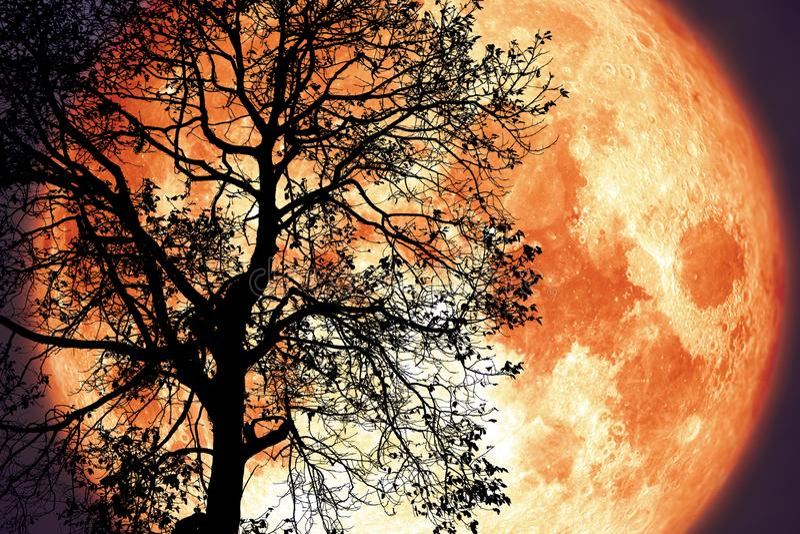 Luna di tuono su cielo notturno indietro sopra l'albero scuro della siluetta fotografia stock