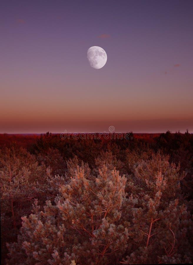 Luna en el horizonte fotografía de archivo