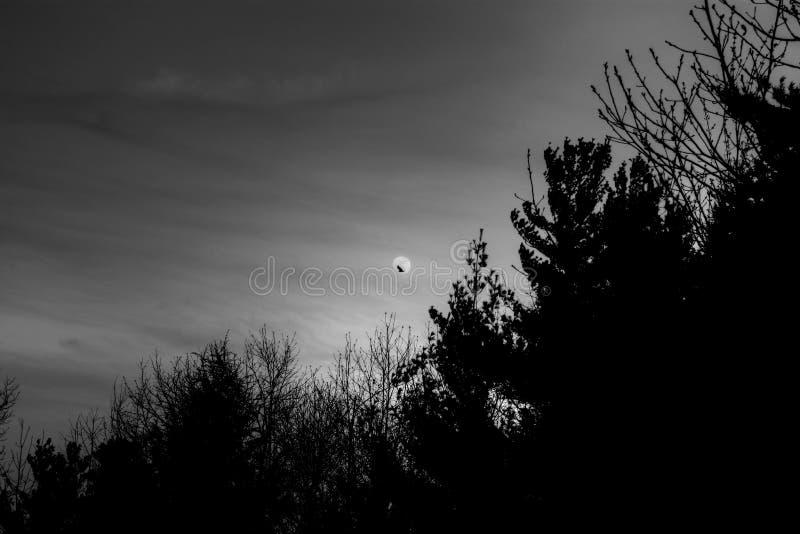 Luna espeluznante con el cuervo fotos de archivo