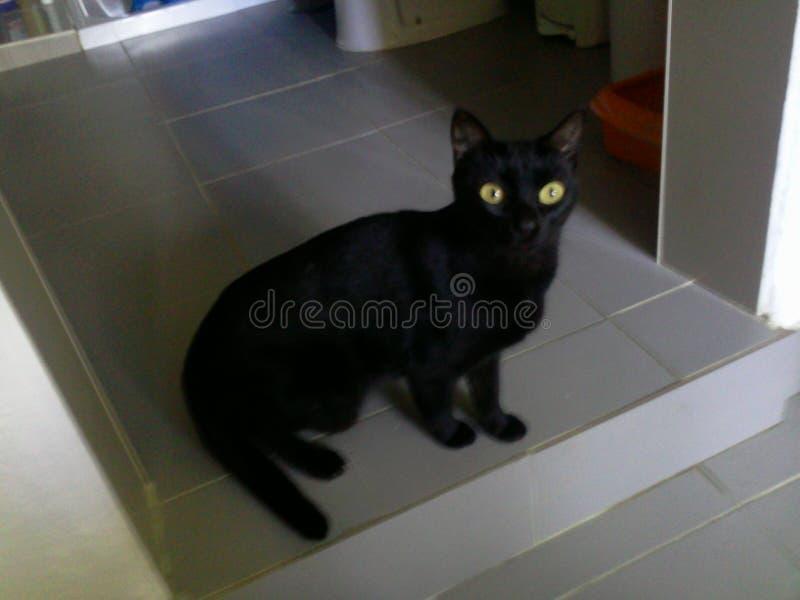 Luna kat royalty-vrije stock afbeelding
