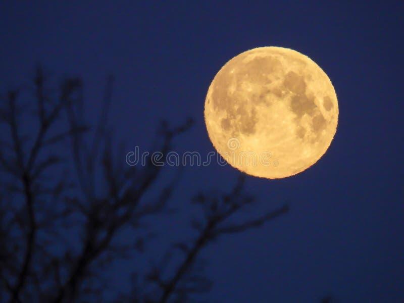 Luna Llena amarilla en el cielo de la mañana imágenes de archivo libres de regalías