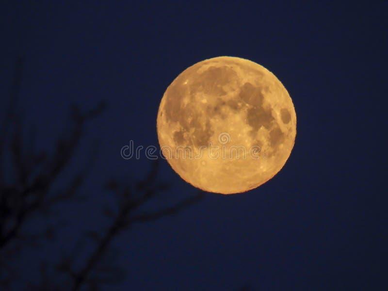 Luna Llena amarilla en el cielo de la mañana fotografía de archivo libre de regalías