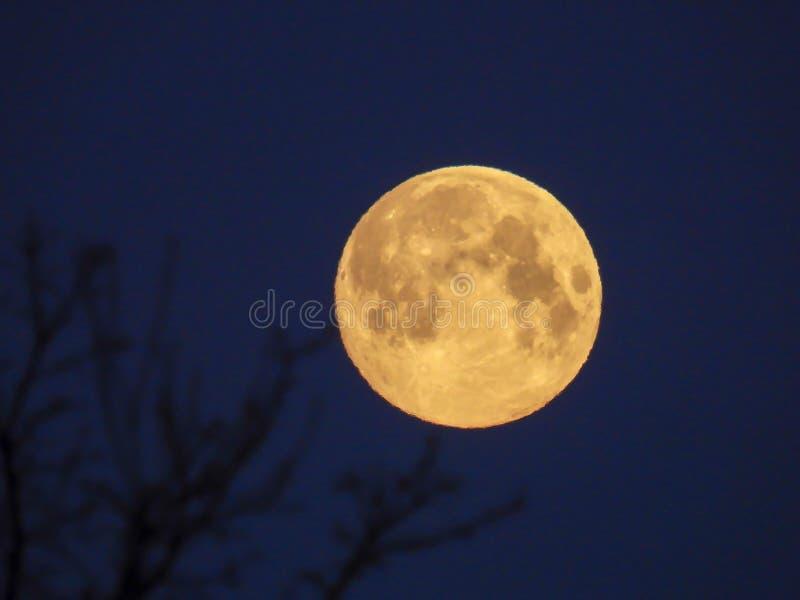 Luna Llena amarilla en el cielo de la mañana foto de archivo