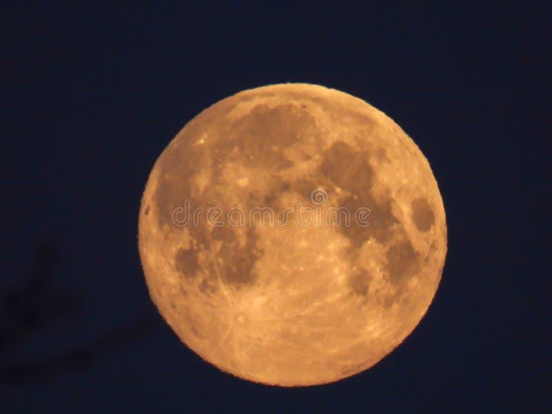 Luna Llena amarilla en el cielo de la mañana fotografía de archivo
