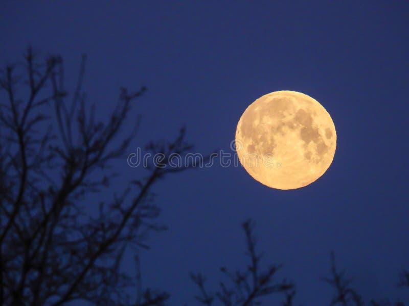 Luna Llena amarilla en el cielo de la mañana fotos de archivo