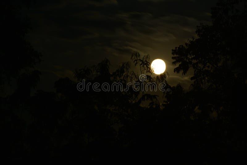 Luna Llena en la noche en el bosque y tan espeluznante y asustadizo imagen de archivo