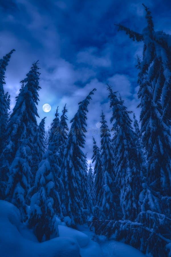 Luna llena en un cielo sobre el bosque de abeto Luna llena en un cielo sobre el bosque de abeto cubierto de nieve fresca por la no fotografía de archivo