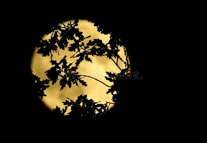 Luna Llena grande en el bosque imágenes de archivo libres de regalías