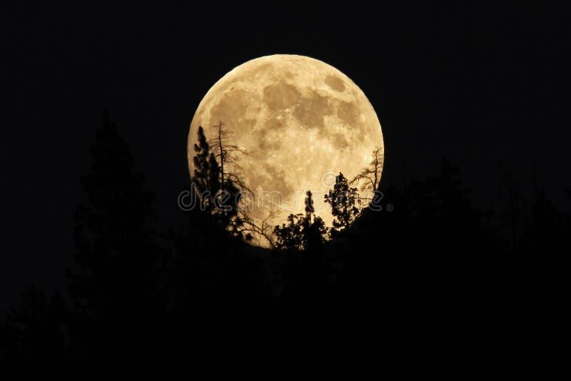 Luna Llena que sube detrás de árboles imágenes de archivo libres de regalías