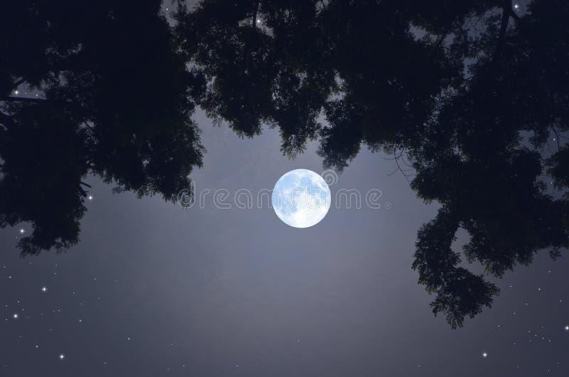Luna Llena romántica hermosa en la sombra de ramas negras con las hojas foto de archivo