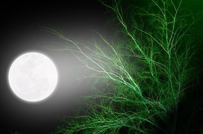 Luna Llena que brilla intensamente sobre el top del árbol fotos de archivo