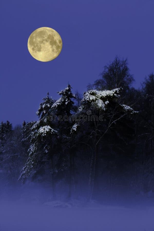 Luna Llena sobre árboles nevosos foto de archivo libre de regalías