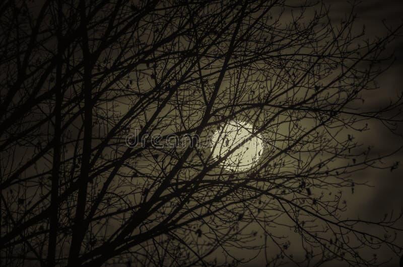 Luna Llena a través de un árbol Cielo nocturno que brilla intensamente fotos de archivo