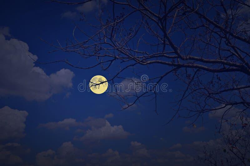 Luna Llena y nubes blancas en noche del cielo azul fotos de archivo