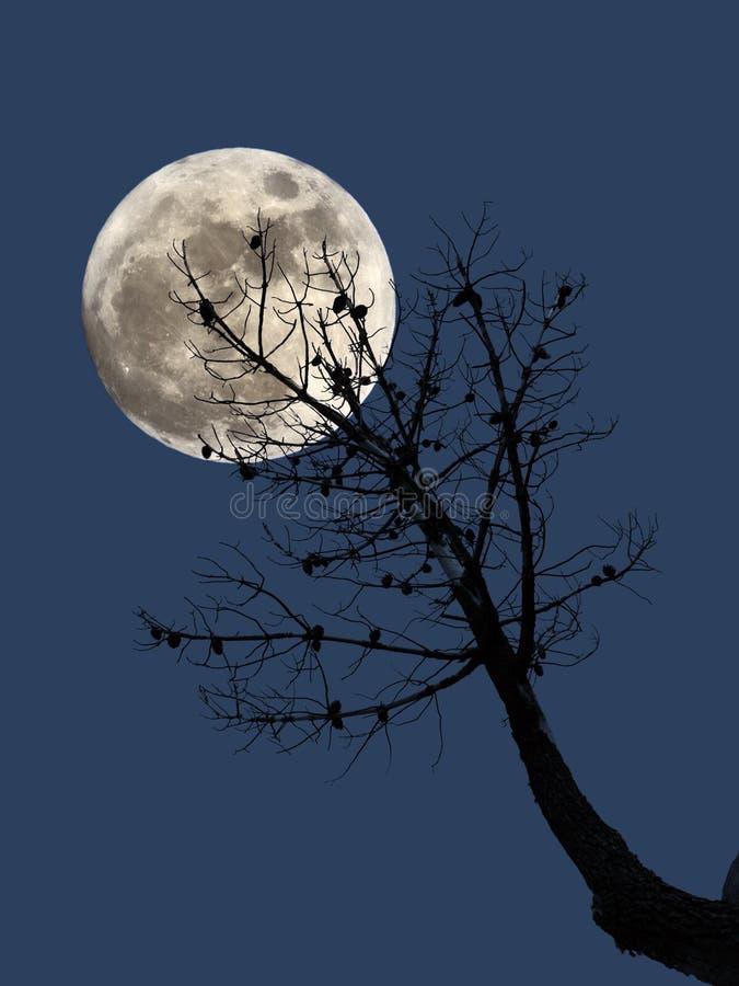Luna Llena y pino muerto ilustración del vector