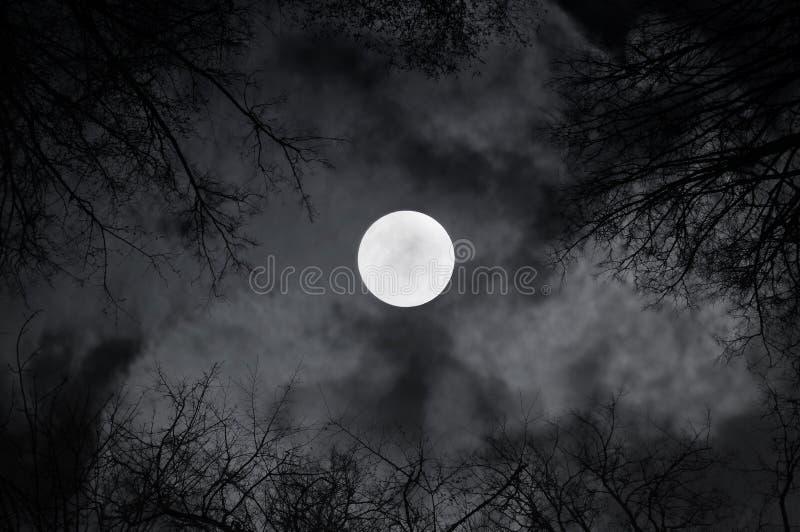 Luna piena brillante nel cielo notturno e nelle nuvole di notte sinistre - il paesaggio misterioso di notte in bianco e nero toni immagini stock libere da diritti