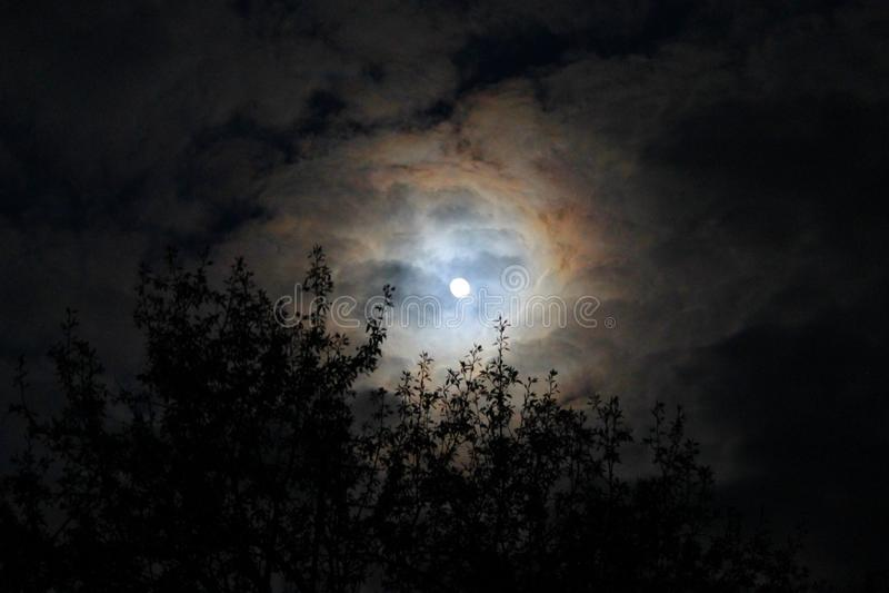 Luna piena che splende attraverso le nuvole e gli alberi immagini stock