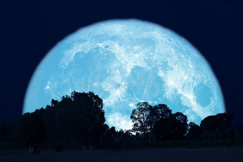 luna piena del dollaro su cielo notturno indietro sopra la foresta della siluetta immagine stock libera da diritti
