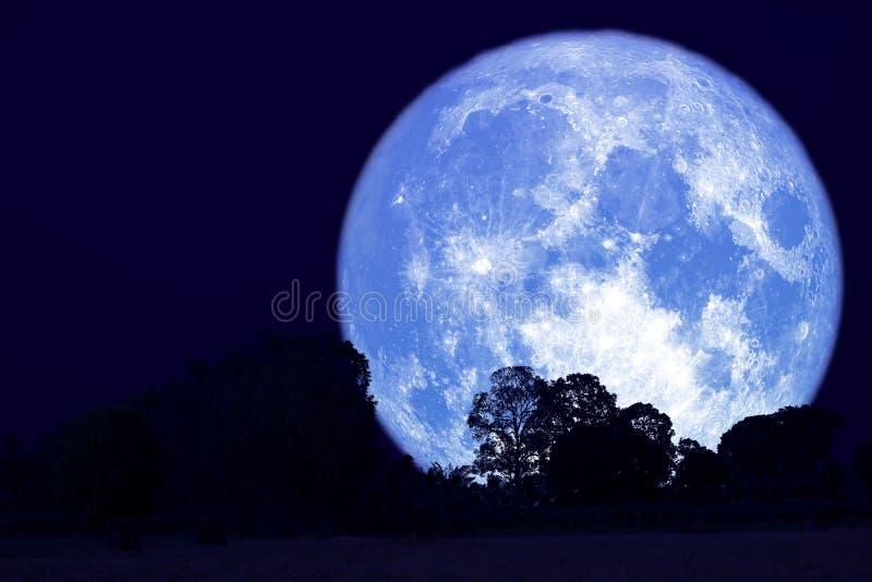 luna piena del dollaro su cielo notturno indietro sopra la foresta della siluetta immagini stock libere da diritti