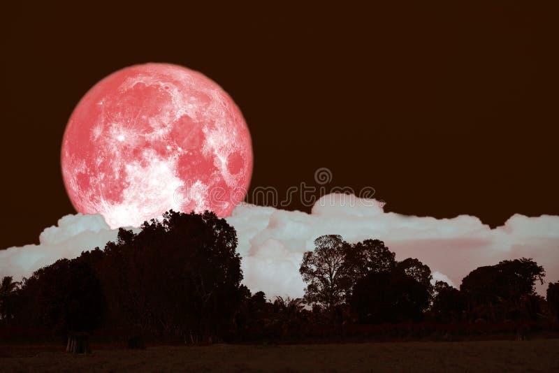 luna piena del fieno su cielo notturno indietro sopra la foresta della siluetta immagine stock